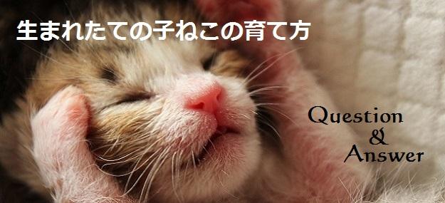 生まれたての子猫の育て方